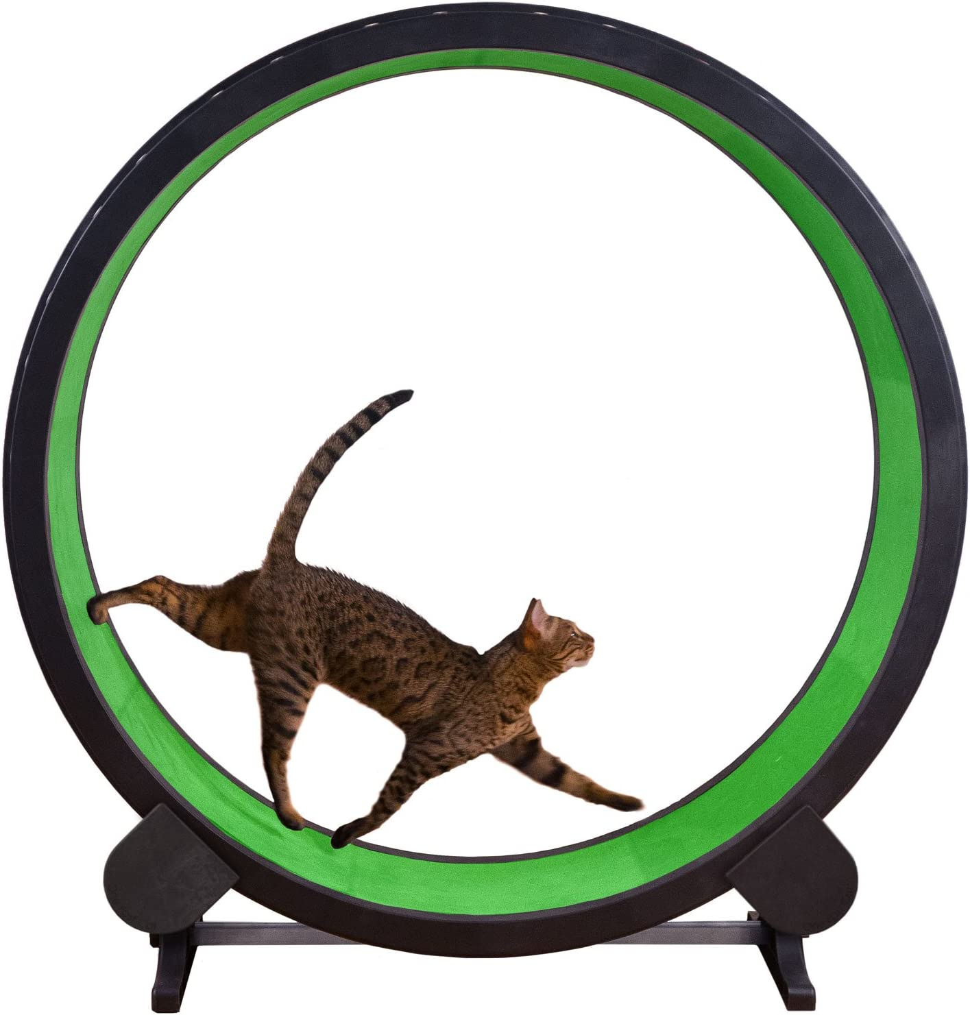 ONE FAST CAT Un rápido Gato Ejercicio Rueda: Amazon.es: Productos para mascotas