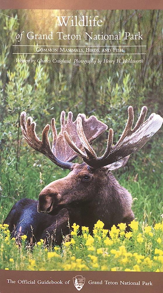 Read Online Wildlife of Grand Teton National Park PDF