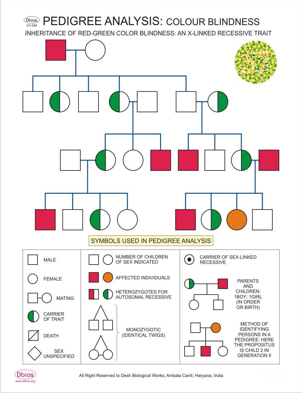 Dbios Digitally Printed Pedigree Analysis Colour Blindness Education