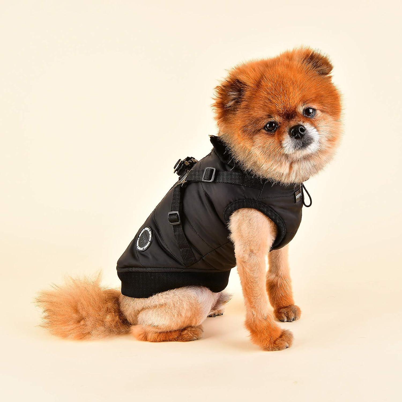 hund mit hundejacke in schwarz für kleinen Hund