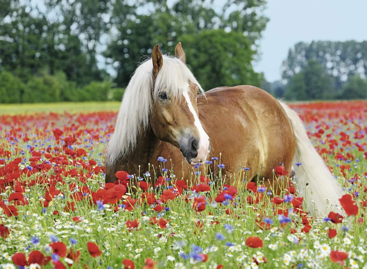 Ravensburger Erwachsenenpuzzle 14831 Ravensburger 14831-Pferd im Mohnfeld-Erwachsenenpuzzle