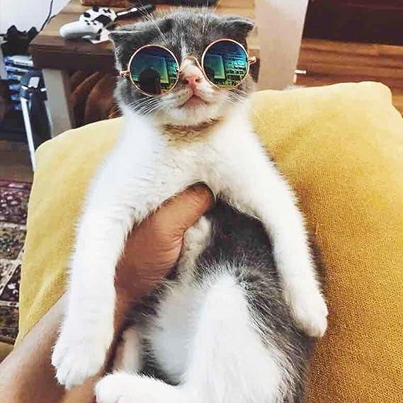 ALINT 1 PC Pet Lunettes de Soleil Fournitures pour Animaux UV Mignon AC + Métal Pet Protection Lunettes de Soleil Super Cool Petit Taille Chiot Chaton Lunettes (noir) hRTgue