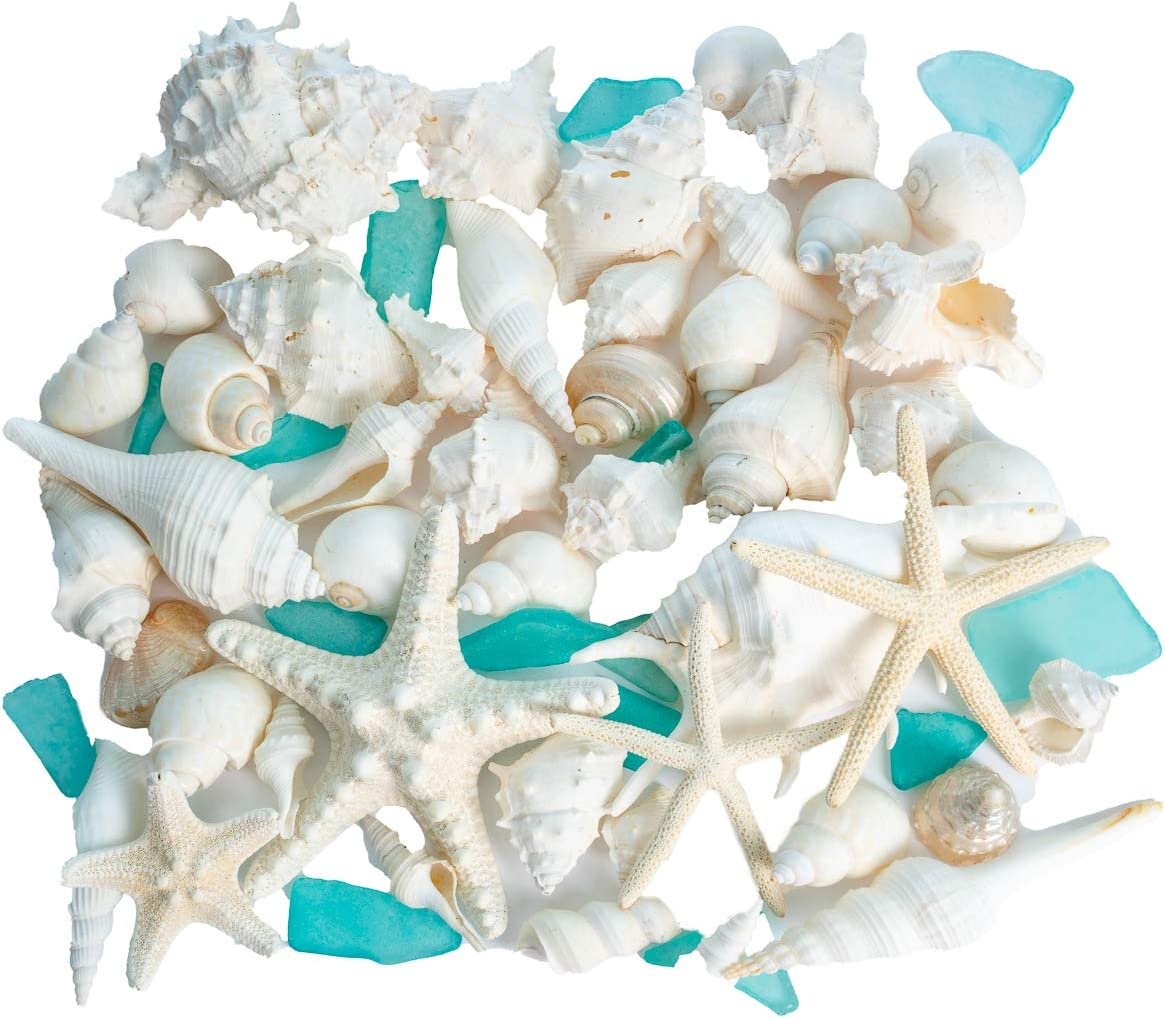 Nautical Crush Trading Sea Shells | Real Mixed Beach Seashells with Real Starfish & Caribbean Blue Sea Glass | White Decorative Seashell Décor & Blue Seaglass Pieces | Seashell Wedding (1 Pack)