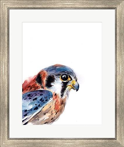 Amazon.com: Great Art Now Bird of Prey II by Sophia Rodionov Framed ...