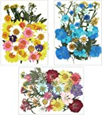 Ioffersuper 120Pcs Dried Pressed Flowers Leaves Real Natural Plants Herbarium for