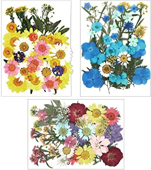 Ioffersuper 120Pcs Dried Pressed Flowers Leaves Real Natural Plants Herbarium for Resin Craft Nail Art Candle Jewelry Gift Making Home DIY Painting Photo Album Decor Face Make-up Supplies