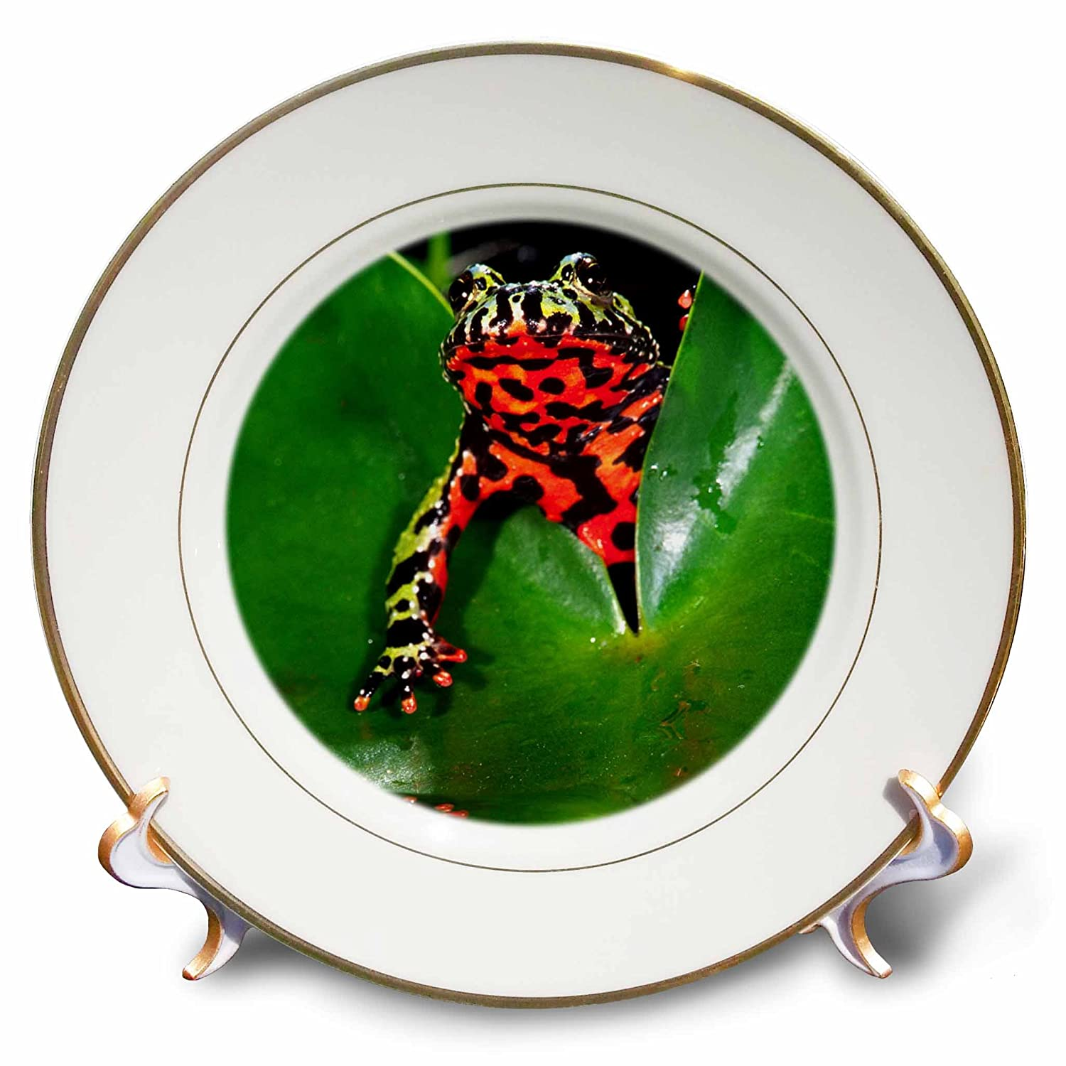 Native to China-Na02 Dno0112-David Northcott-Porcelain Plate 8-Inch 3dRose cp/_83808/_1 Fire Belly Toad