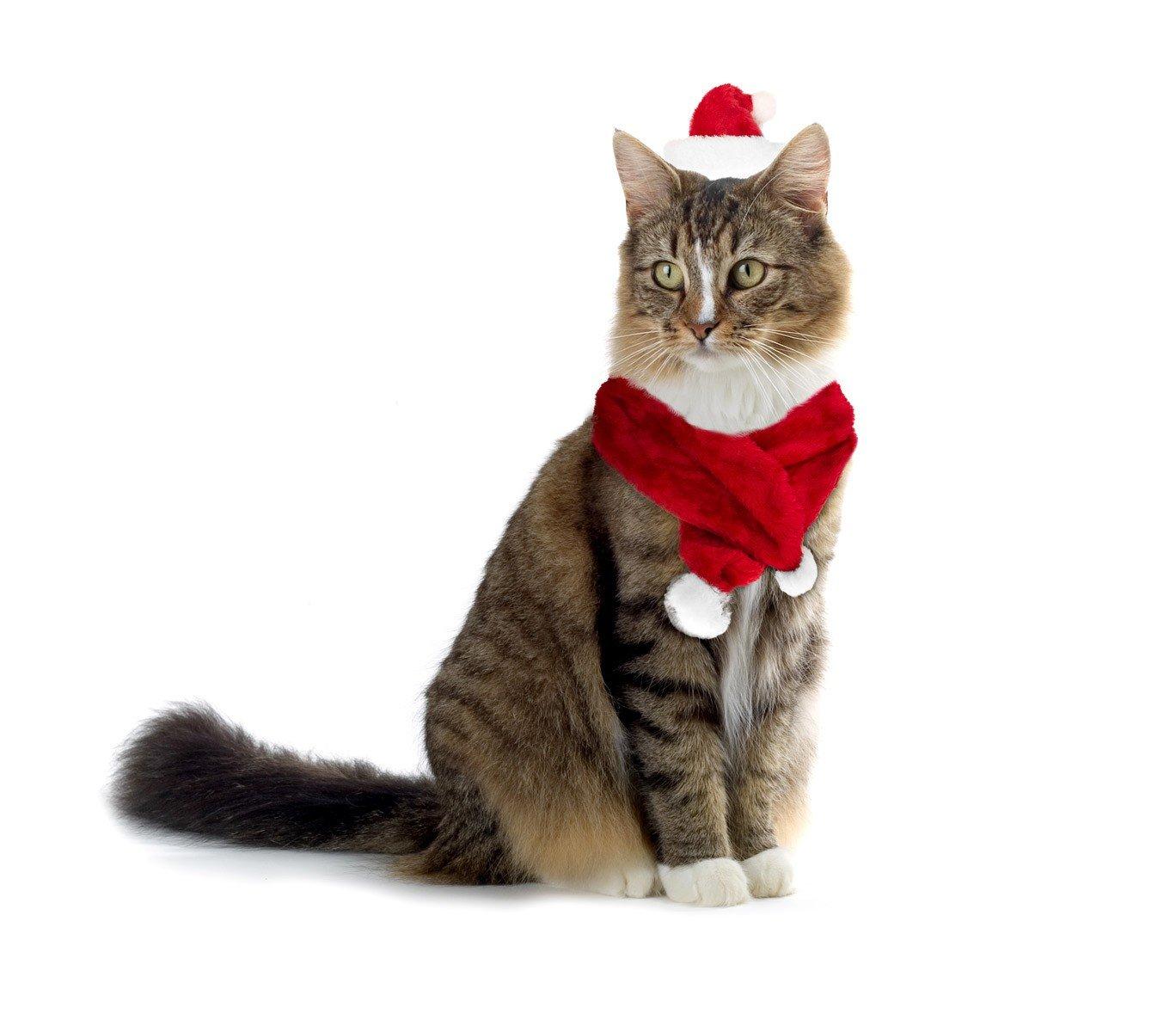 MEDIA WAVE store Set Sciarpa e Cappello Babbo Natale 064234 per Gatti e Cani di Piccola Taglia