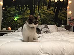Amazon Com Luxury White Down Alternative Comforter Duvet