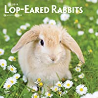 Lop Eared Rabbits 2019 Square Wall Calendar