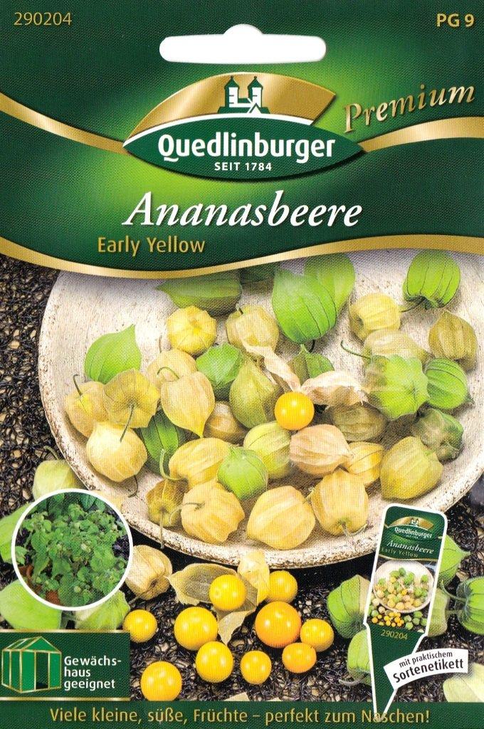 25 Samen Physalis pruinosa Ananasbeere ca