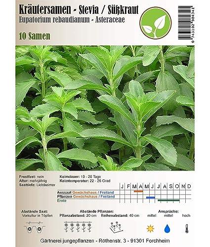40 Samen Stevia Kräuter