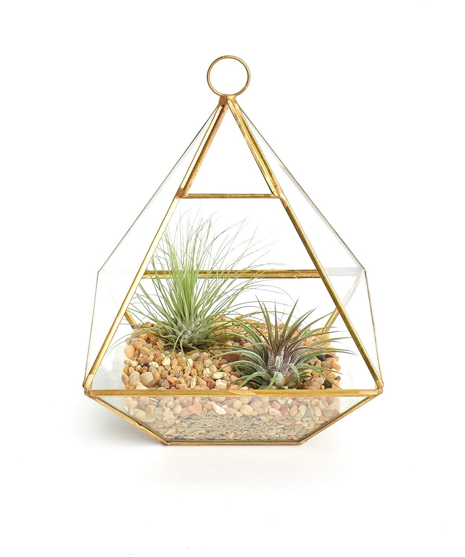 Amazon Com Shop Succulents Air Plant Terrarium Kit Gold