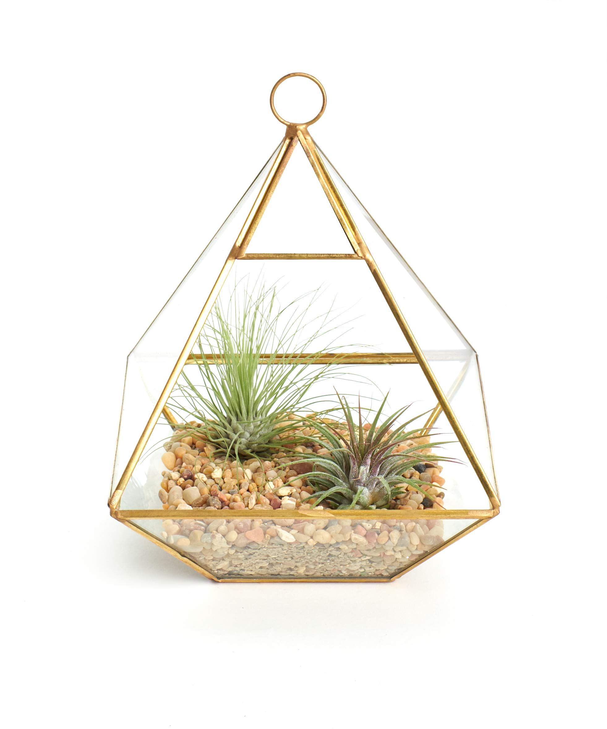 Shop Succulents Geometric Terrarium Kit | Live Air Plants Holder Decor, Gold
