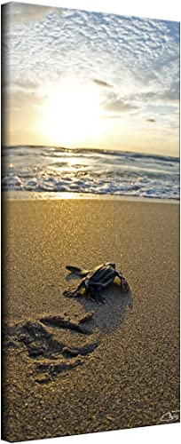 Ready2HangArt Baby Sea Turtle' Coastal Contemporary Photograph Canvas Wall Art Print