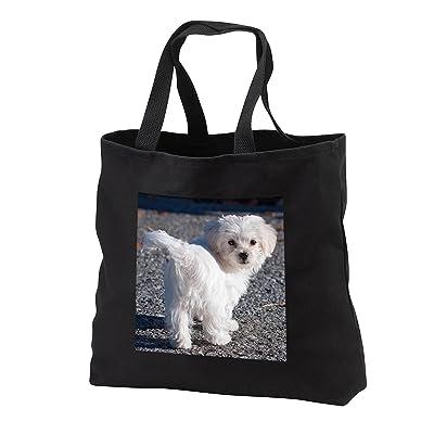 3dRose RinaPiro - Dogs - Maltese. Cute little puppy. - Tote Bags
