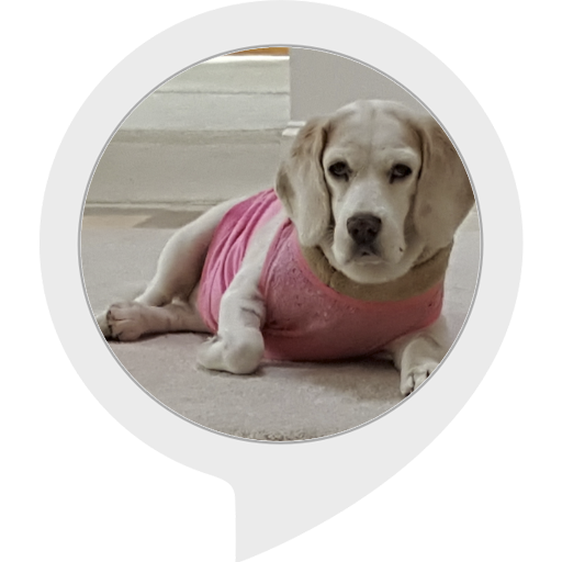 lily-the-beagle-facts