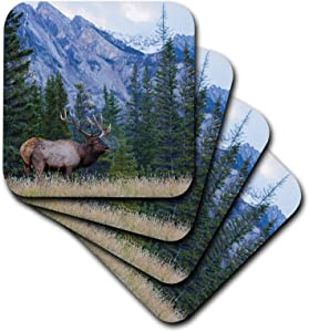 3dRose Danita Delimont - Animals - Rocky Mountain bull elk bugling. - Coasters (cst_345446_3)