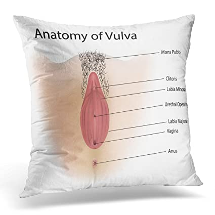 Amazon Golee Throw Pillow Cover Anatomy Vagina Medical Female Gorgeous Medical Pillow Covers