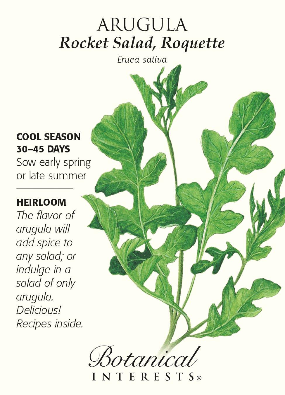 Amazon Com Arugula Rocket Salad Seed Vegetable Plants Patio Lawn Garden