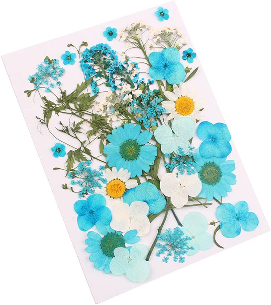 Grizack Pressed Flower Mixed Organic Natural Dried Flowers DIY Art Floral Decors Collection Gift