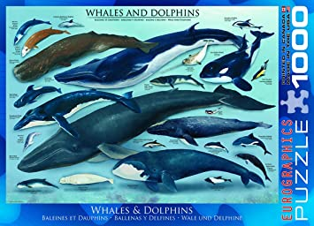amazon com eurographics whales and dolphins puzzle 1000 piece