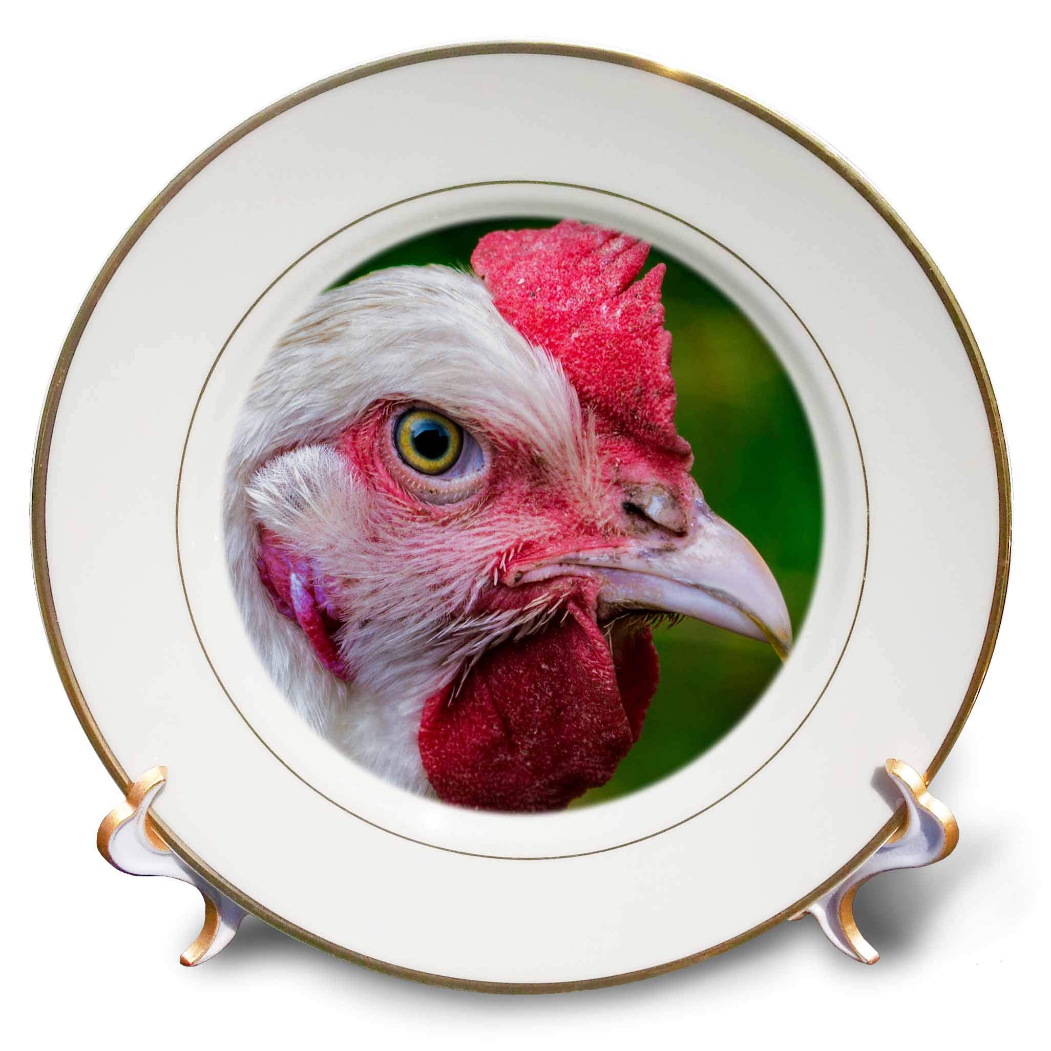 3dRose Sven Herkenrath Animal - Close Up View of Chicken Bird Farm Animal Photography - 8 inch Porcelain Plate (cp_294235_1)