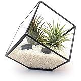 LoveGlass Terrario a cubo in vetro, piccolo, vaso, per giardinaggio in ambienti interni, design moderno, realizzato a mano, Vetro, nero, 13x15x15