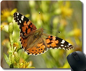 Mouse Pad Funny Customized,Butterfly Red Admiral Butterflies Insects Animal Mouse Pads with Stitched Edges