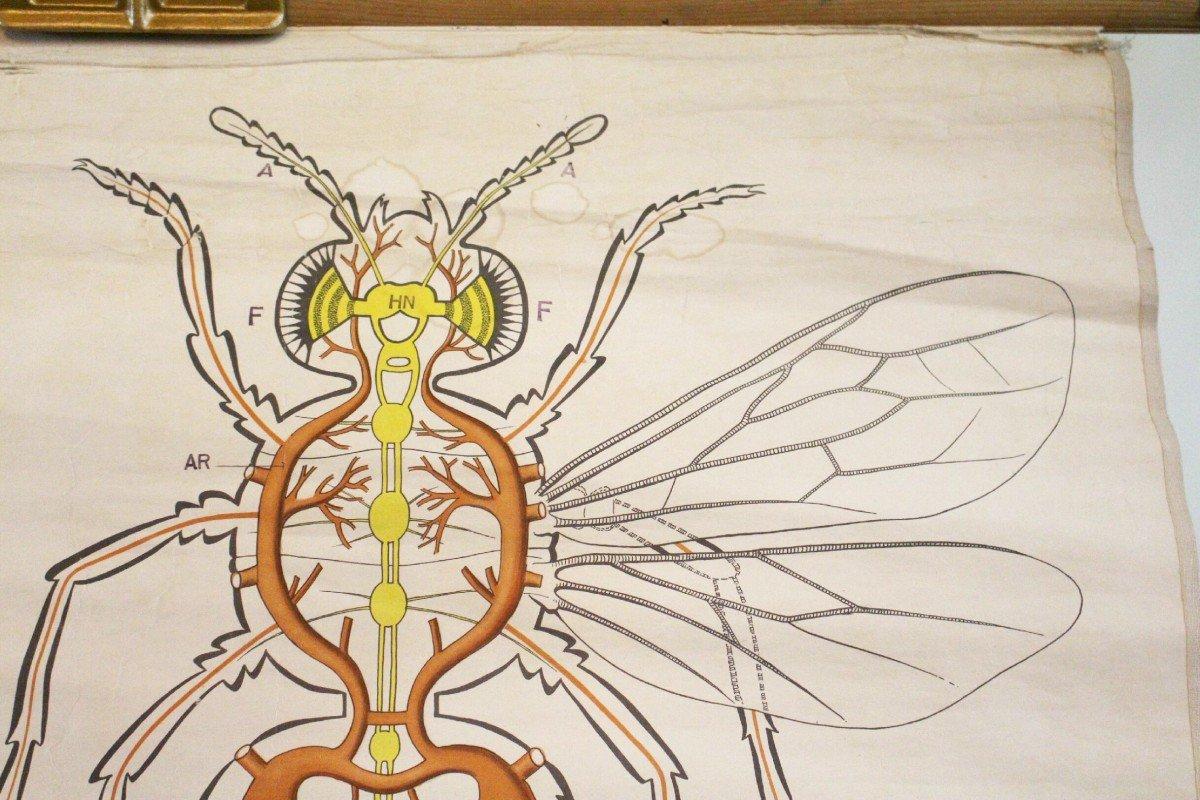 vintage13.de Schulwandkarte Rollkarte Lehrtafel Biene Insekt ...