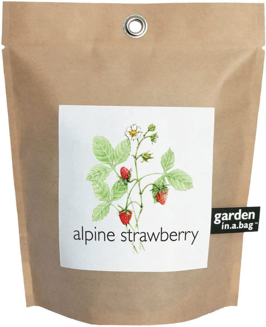 Potting Shed Creations Alpine Strawberry Garden-in-a-Bag