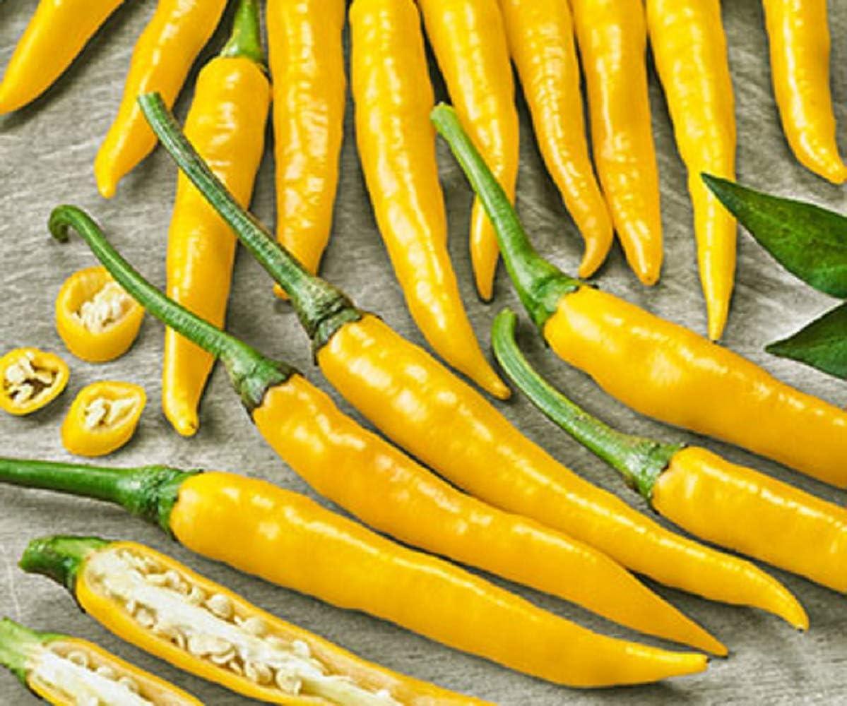 Cayenne Golden Hot Pepper Organic Non-GMO 24 Seeds