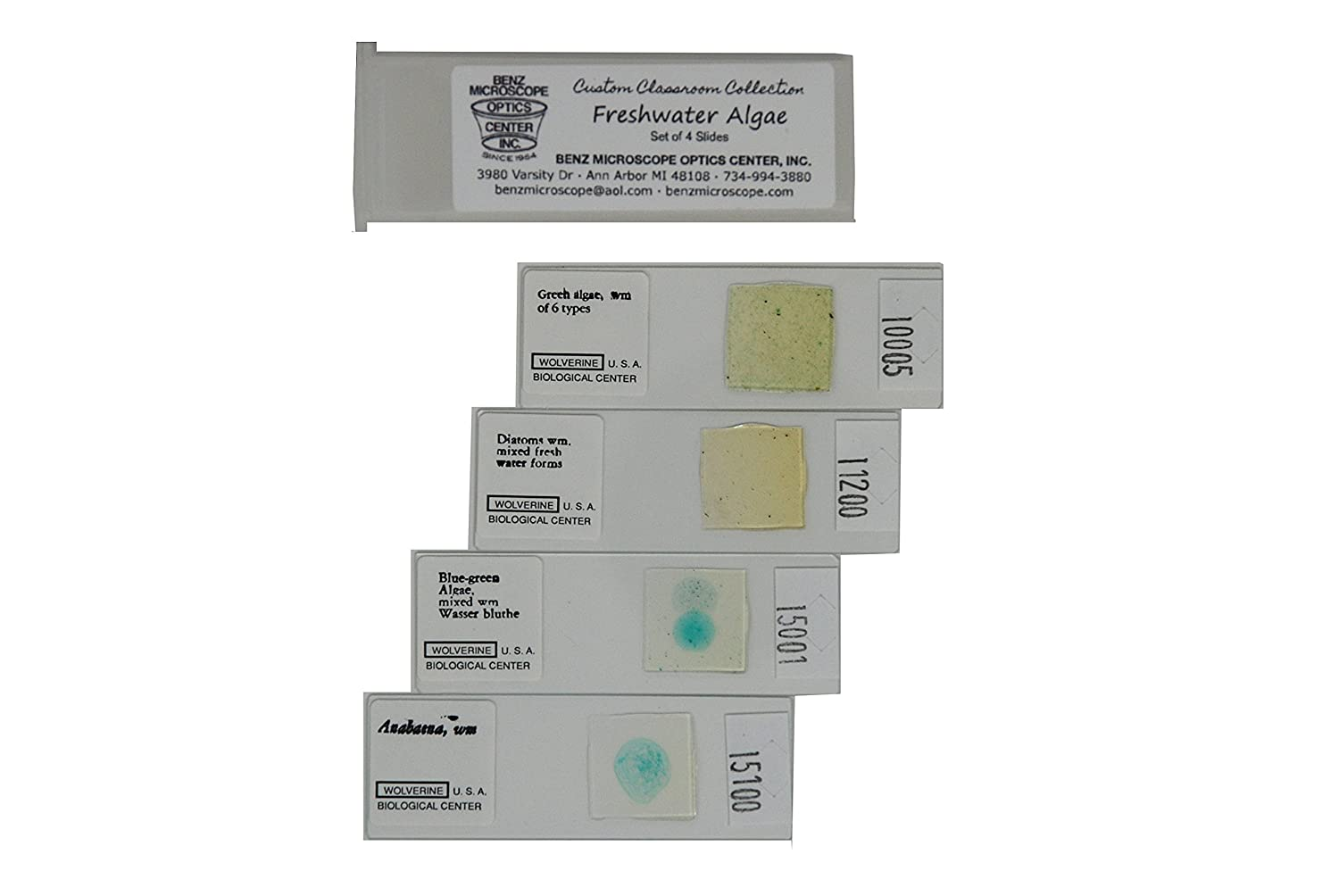 Set of 4 Prepared Slides Freshwater Algae