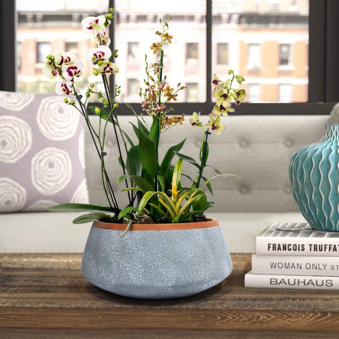Amazon.com: Maceta suculenta grande – Maceta de orquídea de ...