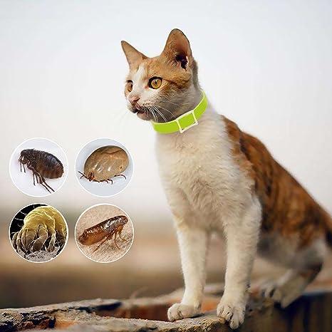 Mini 33cm Gato Mascota Salud Anti Piojos Collar Anti pulgas Garrapatas Mosquitos Repelente Collar Parásitos Desparasitación Verde: Amazon.es: Juguetes y ...