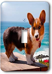 3dRose lsp_206233_1 Pembroke Welsh Corgi puppy standing on wooden table Single Toggle Switch