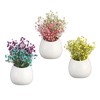 Amazon Pack Of 3 White Ceramic Wall Vase Hanging Air Plant