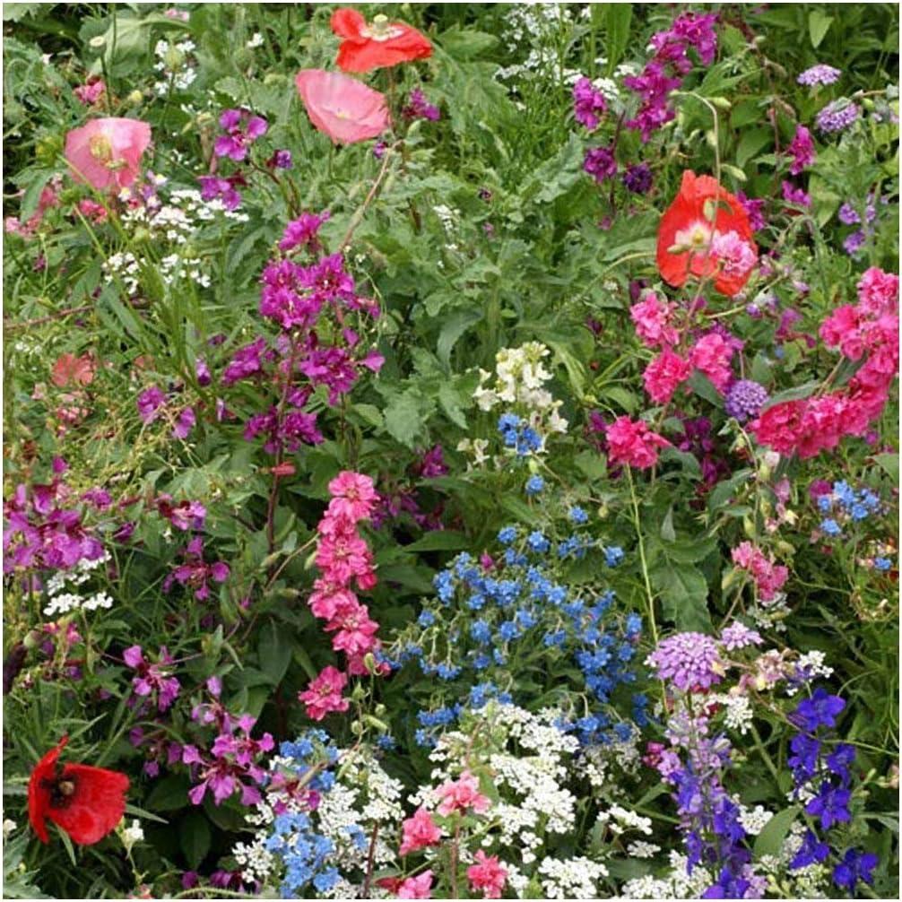 Amazon Com Earthcare Seeds Wildflowers For Shade 10 000 Seeds