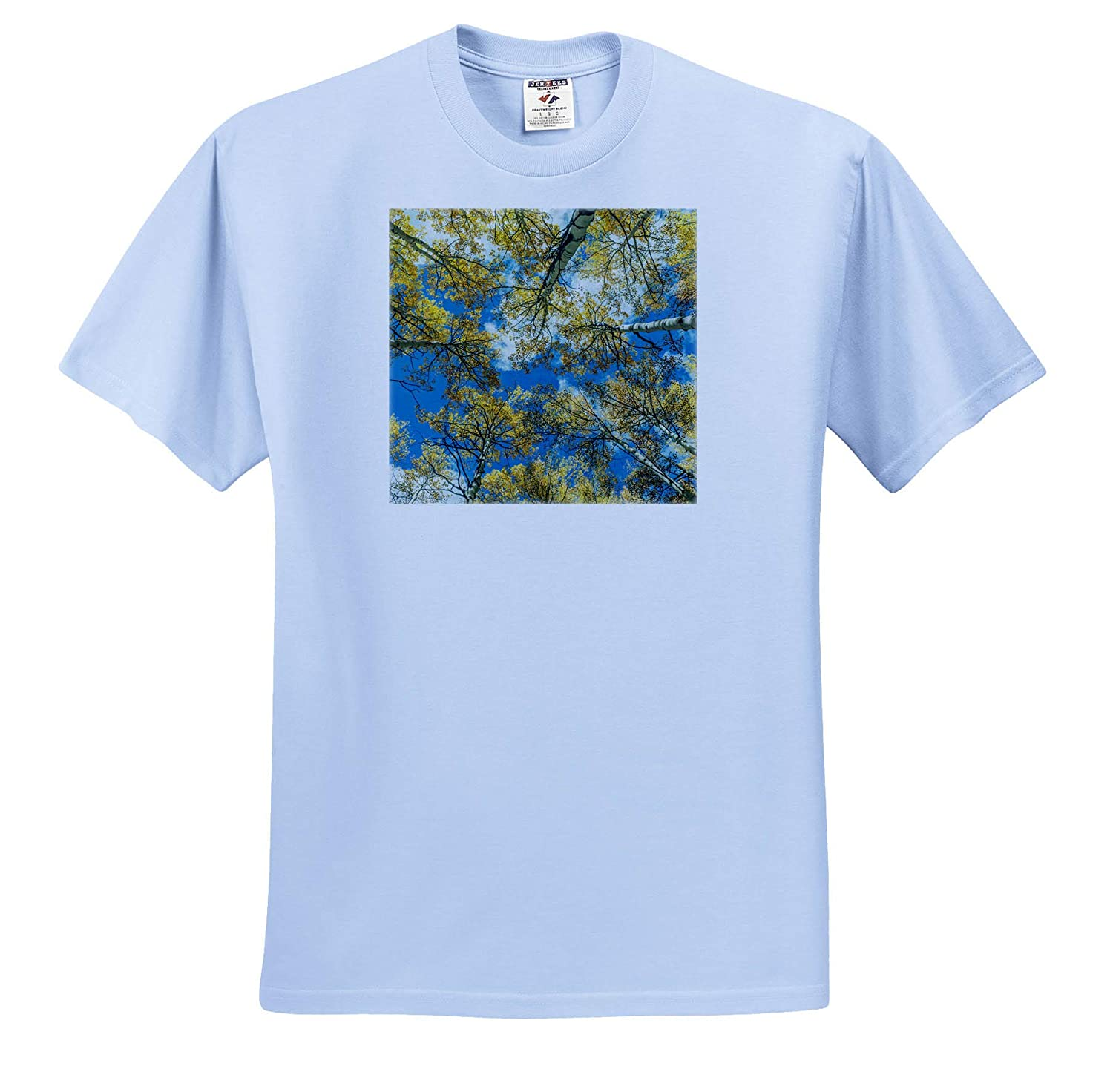 - Adult T-Shirt XL ts/_314750 Looking up to The Sky in an Aspen Grove with Autumn Color 3dRose Danita Delimont Autumn