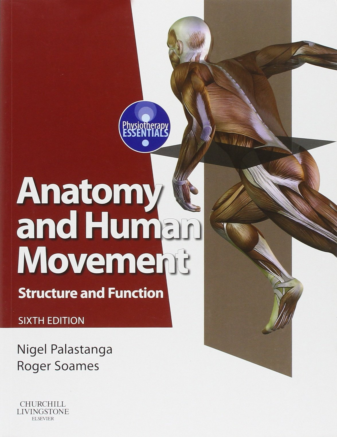 Anatomy And Human Movement  Structure And Function  Physiotherapy Essentials