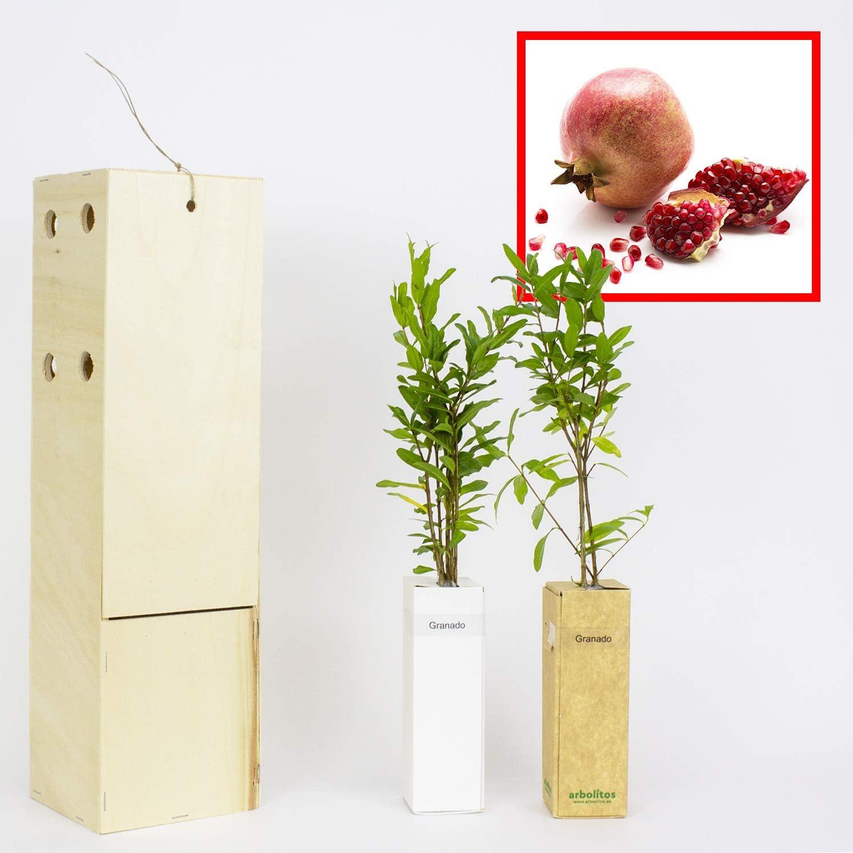 GRANADO. Arbolito de pequeño tamaño en caja de madera. Alveolo forestal del granado (2)