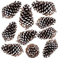 """Supla 10 PCS Natural Pinecones Medium Frosted Pine Cones Ornaments Real Preserved Pine Cones - Dried -3""""- 4"""" Tall for Home Decor Christmas Winter Xmas"""