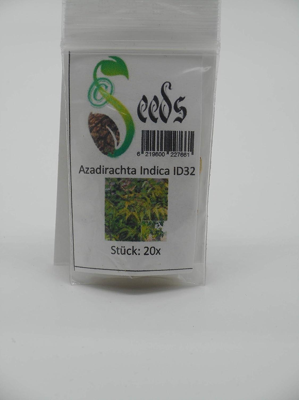 20 x Azadirachta Indica Niembaum Niem Neem Margosa Seeds Tree Plants ID32