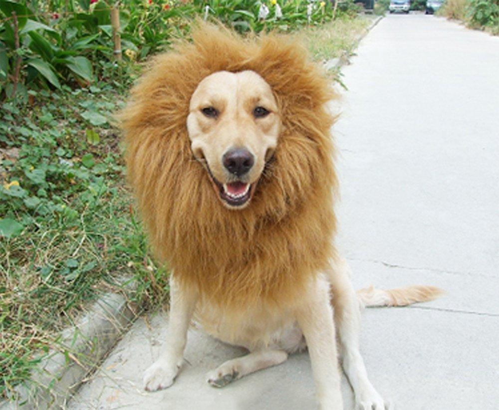 Amazon.com  Sunreek Large Pet Dog Cat Lion Wigs Mane Hair Festival Party Fancy Dress Clothes Costume  Pet Supplies & Amazon.com : Sunreek Large Pet Dog Cat Lion Wigs Mane Hair Festival ...