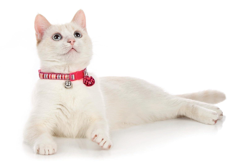 Talla /Única HUNTER HT92308 Brillante Rosa Rosa Gato Collar