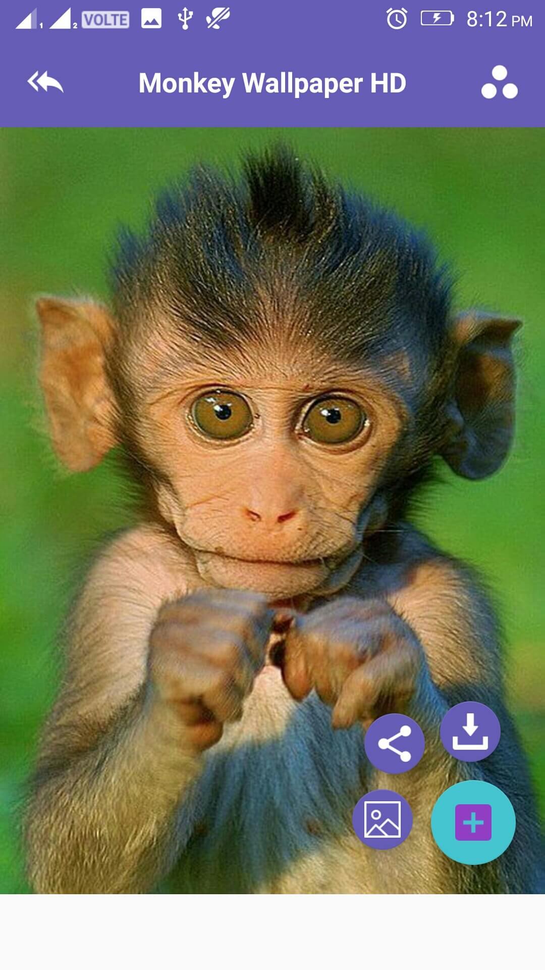 Monkey 4k Wallpaper Amazones Appstore Para Android