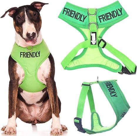 Arnés para perro, diseño con palabra en inglés