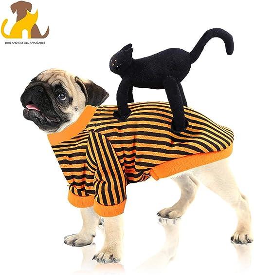 Nwayd Disfraz para Mascota,Halloween,Gracioso Gato parado en la ...