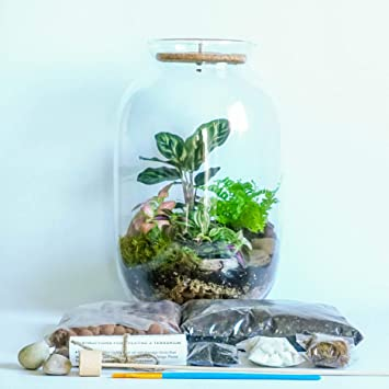 Plant Terrarium Kit Open Or Closed With Cork Top Garden Display