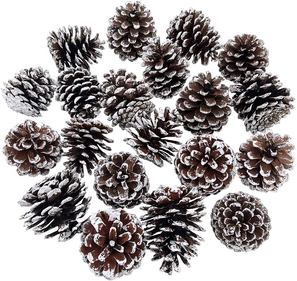 besttoyhome 20-Piece Snow Tipped Real Natural Dried Pine Cones Frosted Pinecones Ornaments